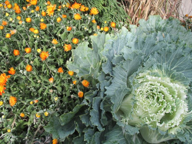 Suzetteroberts - so much cabbage - 10 14 16 (4)