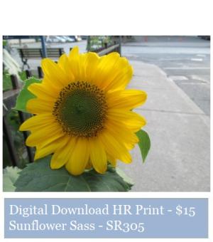 Suzetteroberts - suzette's print shop - sunflower sass - SR305