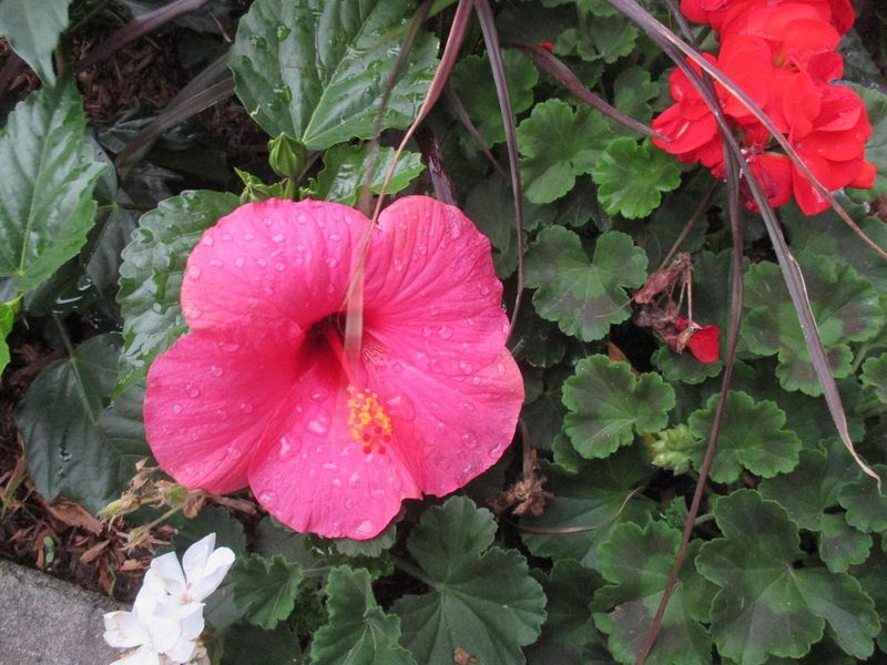 Suzetteroberts - hello july 2015 (5)
