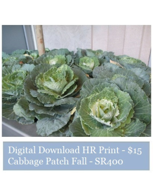 Suzetteroberts - suzette's print shop - cabbage patch fall - SR400