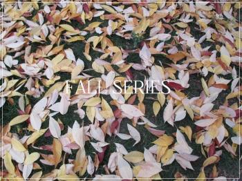 Suzetteroberts - fall series - 2018
