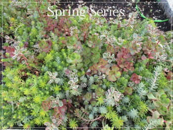 Suzetteroberts - spring series - 2018