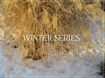 Suzetteroberts - winter series - 2017 (december - march)