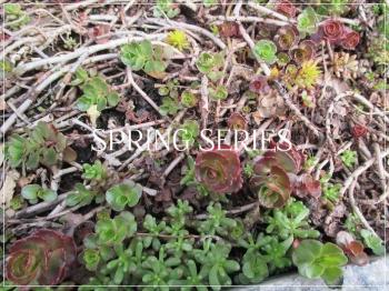Suzetteroberts - spring series