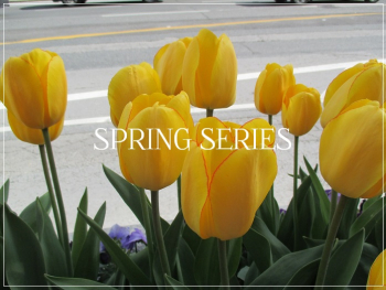 Suzetteroberts - spring series - 2019