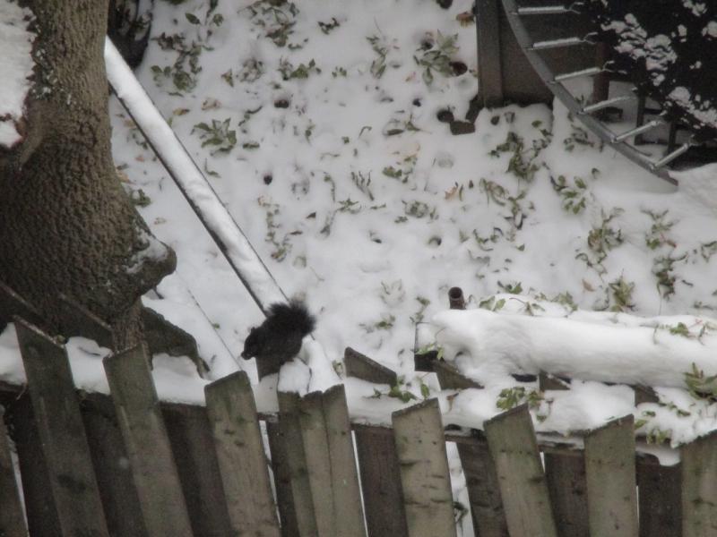 Suzetteroberts - scenes - 11 2019 - dashing through the snow