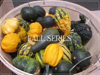 Suzetteroberts - fall series - 2020