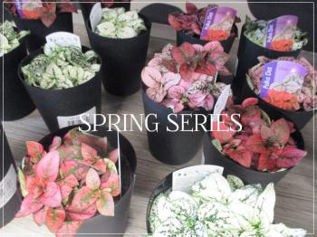 Suzetteroberts - spring series 2021