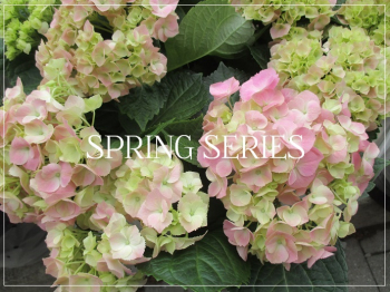 Suzetteroberts - spring series - 2020
